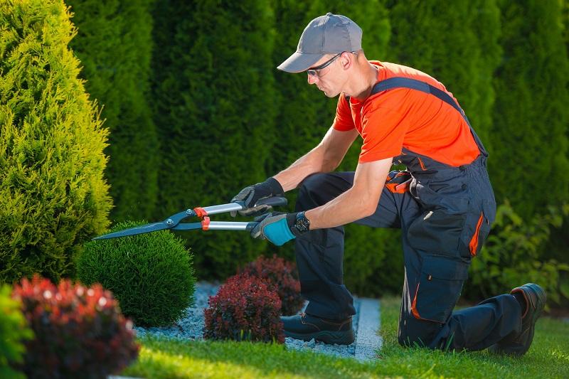 Redcliffe handyman gardening services